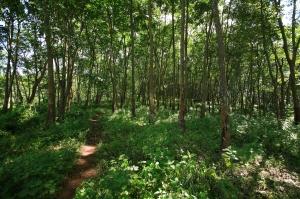 Hutan Lebak [ilustrasi]
