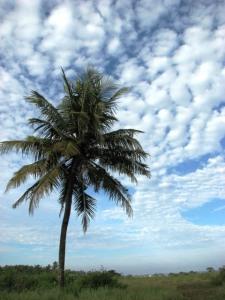Pojok Desa Menuju pantai Sawarna